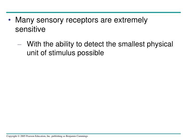 Many sensory receptors are extremely sensitive