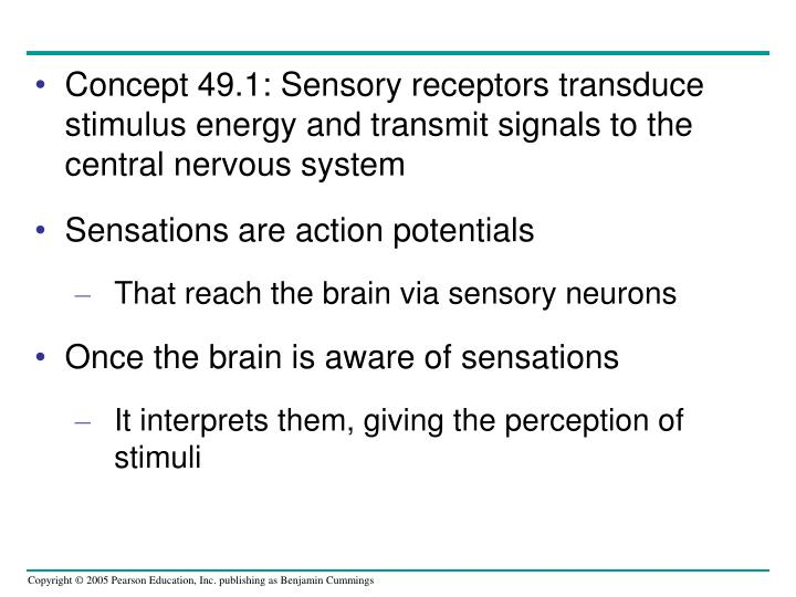 Concept 49.1: Sensory receptors transduce stimulus energy and transmit signals to the central nervous system