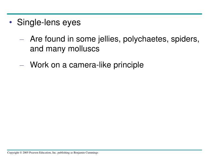 Single-lens eyes