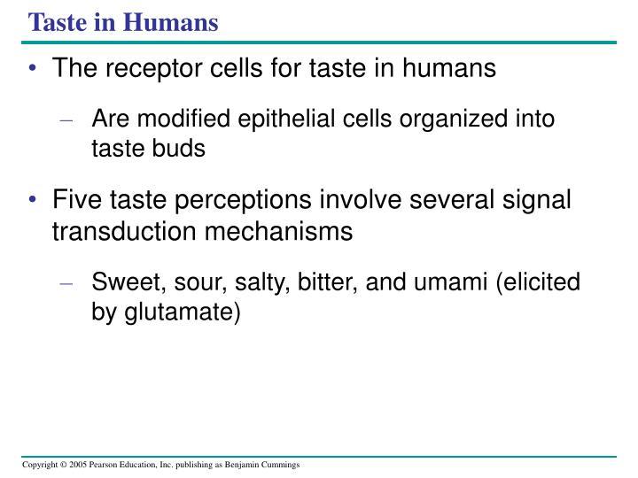 Taste in Humans