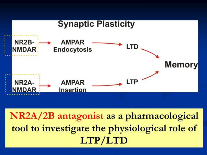 NR2A/2B antagonist