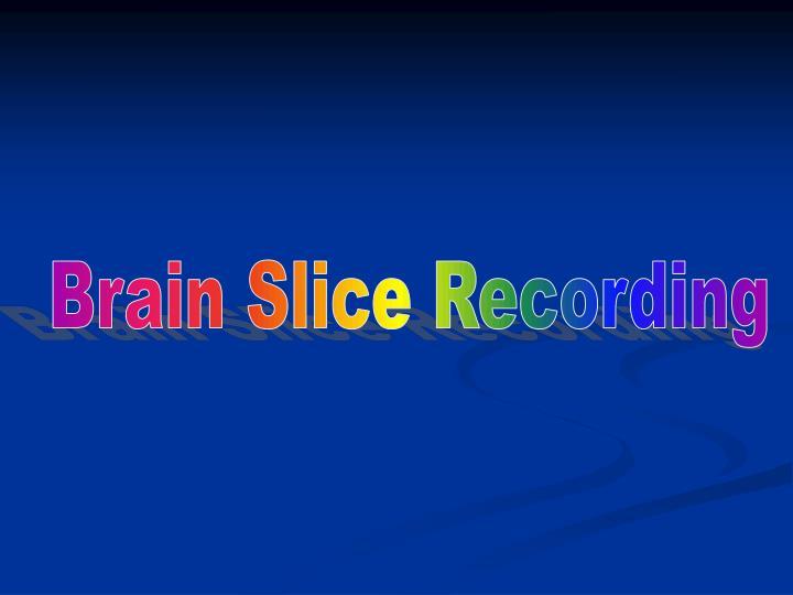 Brain Slice Recording