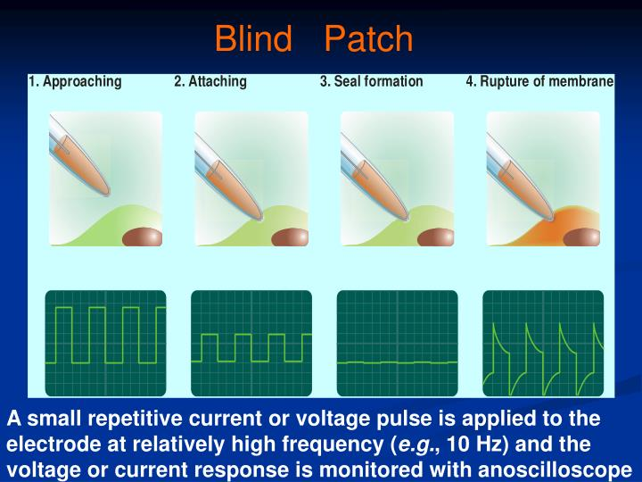 Blind   Patch