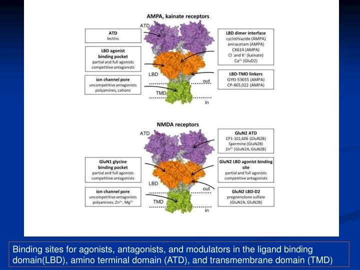 Binding sites for agonists, antagonists, and modulators in the ligand binding domain(LBD), amino terminal domain (ATD), and transmembrane domain (TMD)