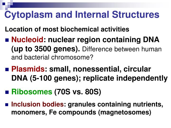 Cytoplasm and Internal Structures
