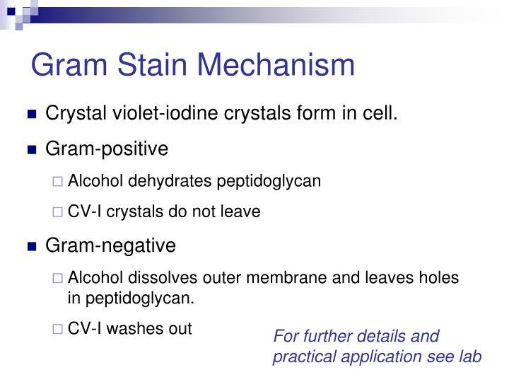 Gram Stain Mechanism