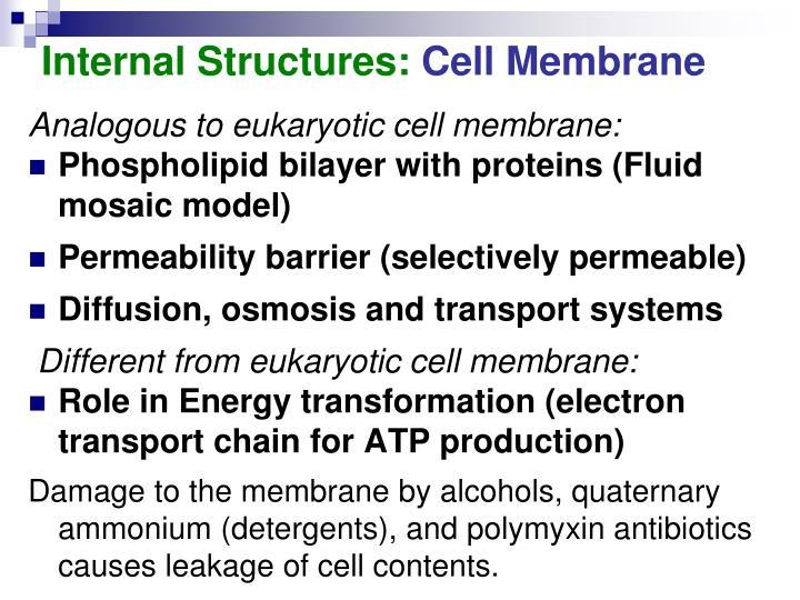 Internal Structures: