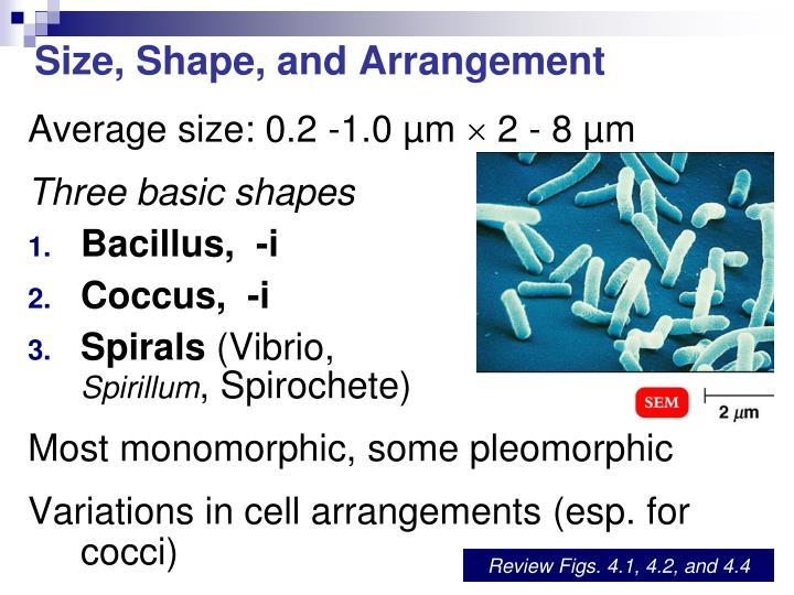 Size, Shape, and Arrangement