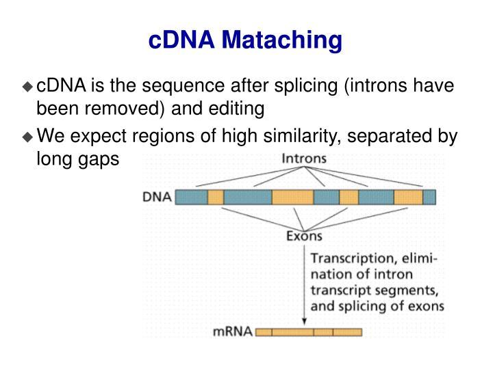 cDNA Mataching
