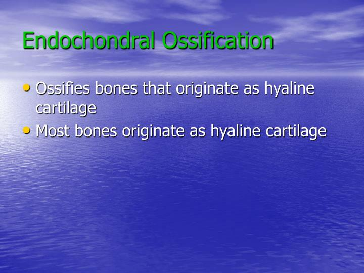 Endochondral Ossification