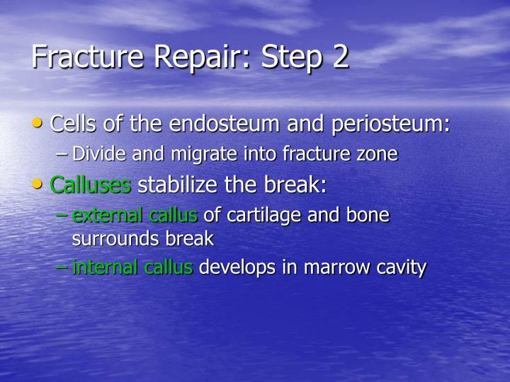Fracture Repair: Step 2