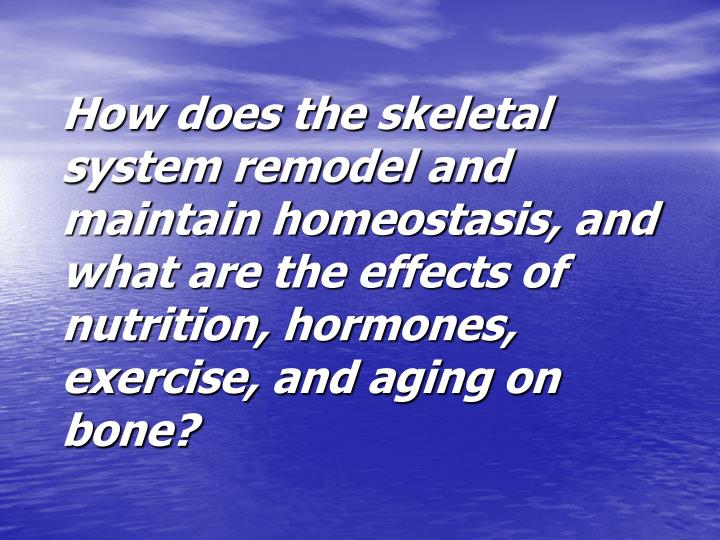 How does the skeletal system remodel and maintain homeostasis, and what are the effects of nutrition, hormones, exercise, and aging on bone?
