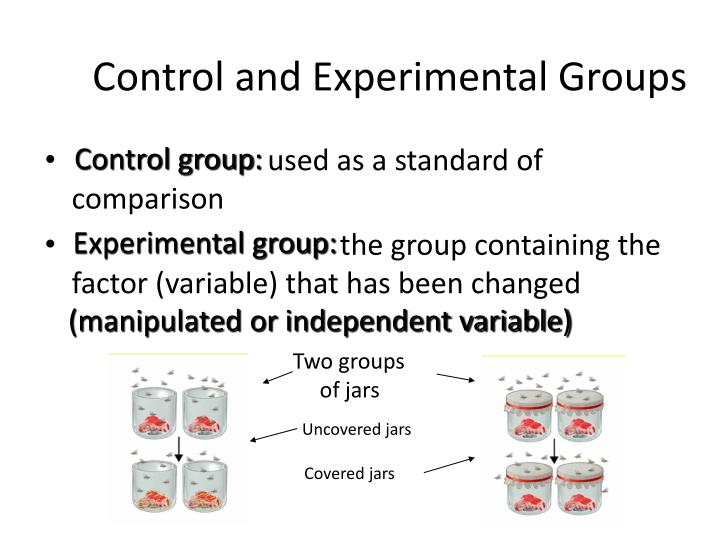 Experimental Group Control Group