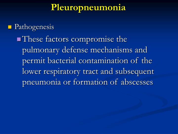 Pleuropneumonia