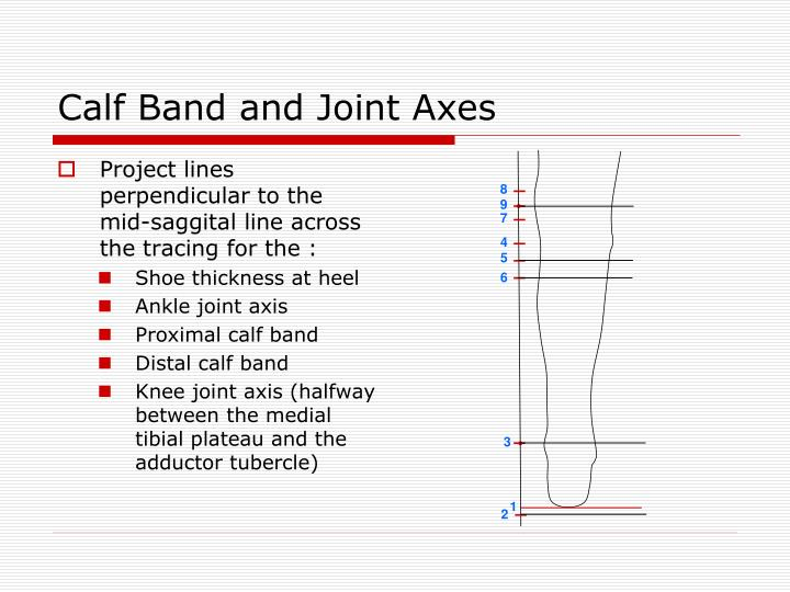 Calf Band and Joint Axes