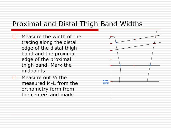 Proximal and Distal Thigh Band Widths