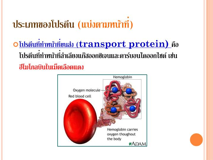 ประเภทของโปรตีน