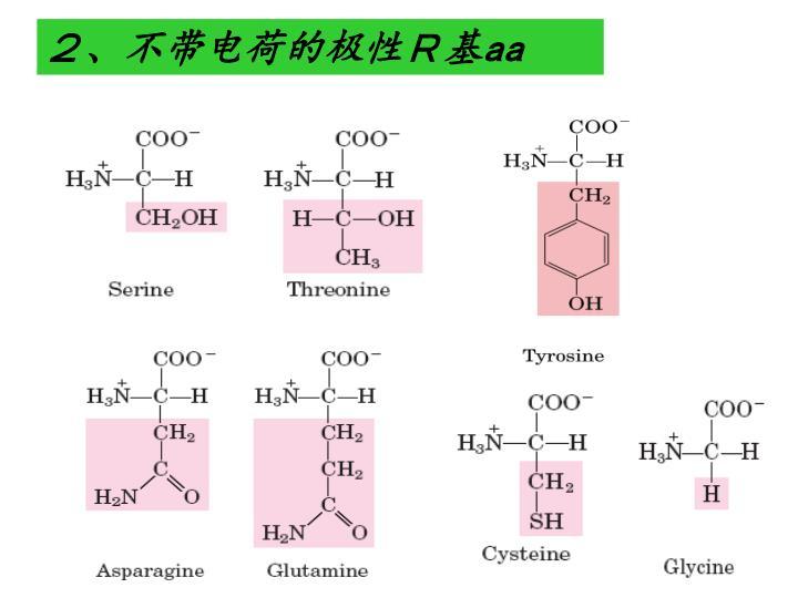 2、不带电荷的极性R基