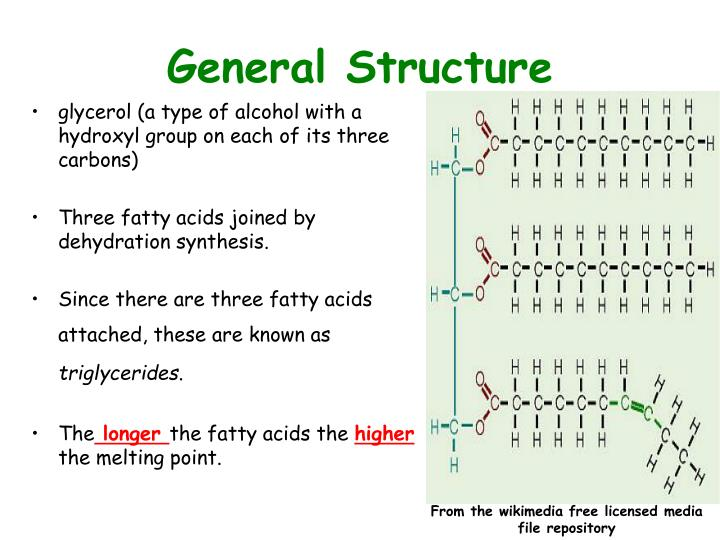 General Structure