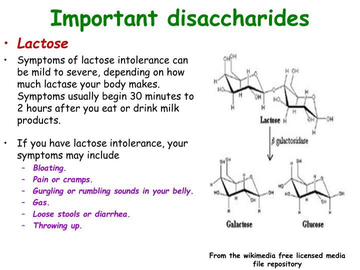 Important disaccharides