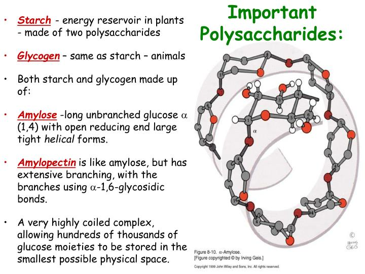Important Polysaccharides: