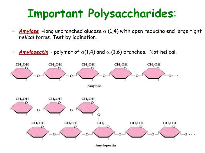 Important Polysaccharides