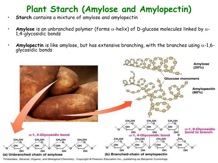 Plant Starch (Amylose and Amylopectin)
