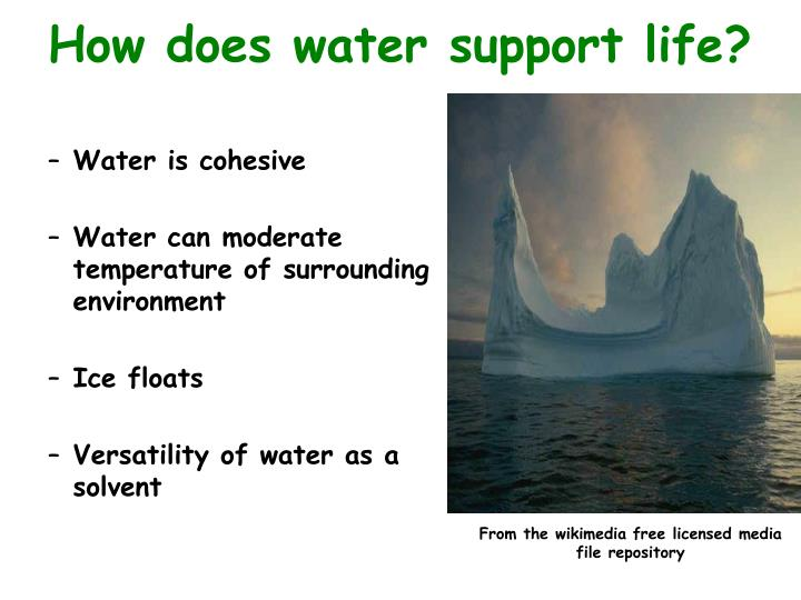 How does water support life?