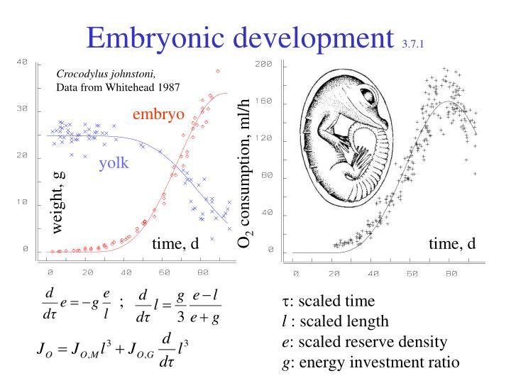 Embryonic development