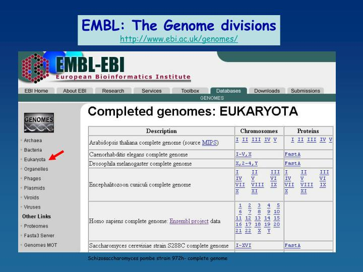 EMBL: The Genome divisions