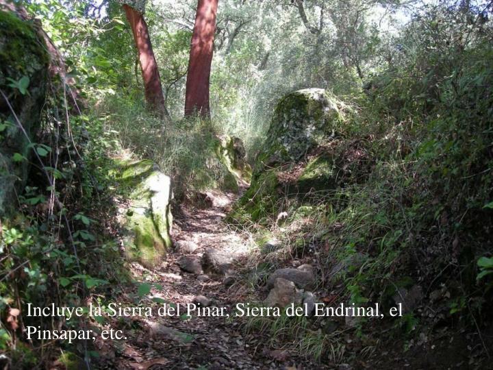Incluye la Sierra del Pinar, Sierra del Endrinal, el Pinsapar, etc.