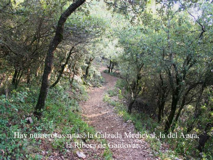 Hay numerosas rutas: la Calzada Medieval, la del Agua, la Ribera de Gaidovar…