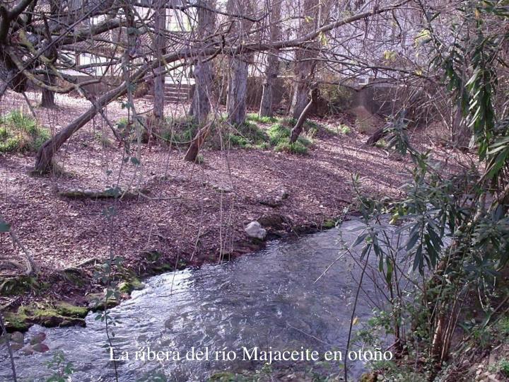 La ribera del río Majaceite en otoño