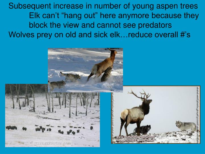 Subsequent increase in number of young aspen trees
