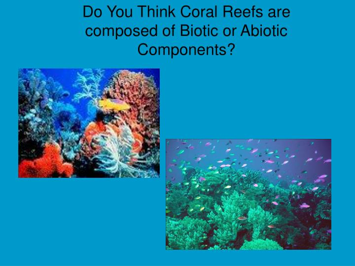 Do You Think Coral Reefs are composed of Biotic or Abiotic Components?