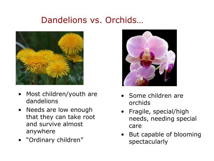 Dandelions vs. Orchids…