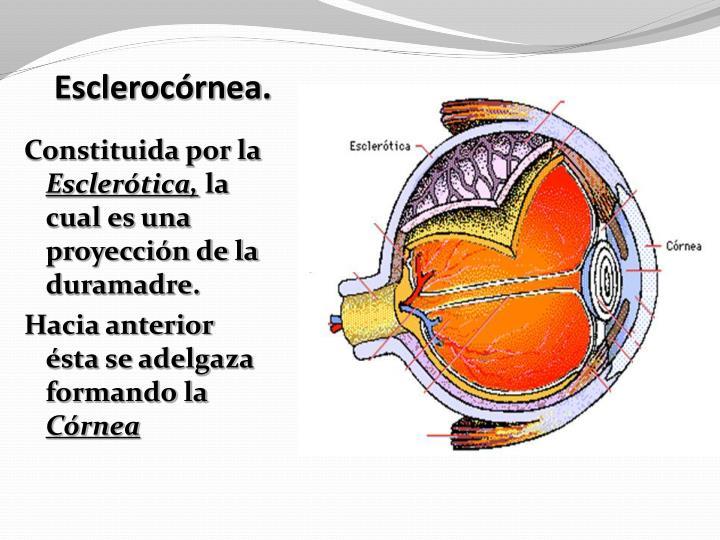 Esclerocórnea