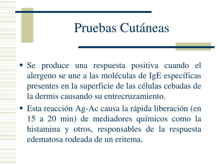 Pruebas Cutáneas