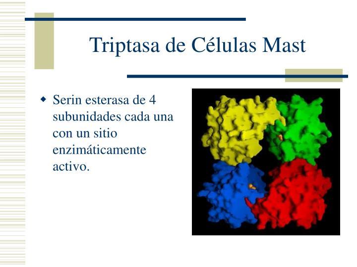 Triptasa de Células Mast
