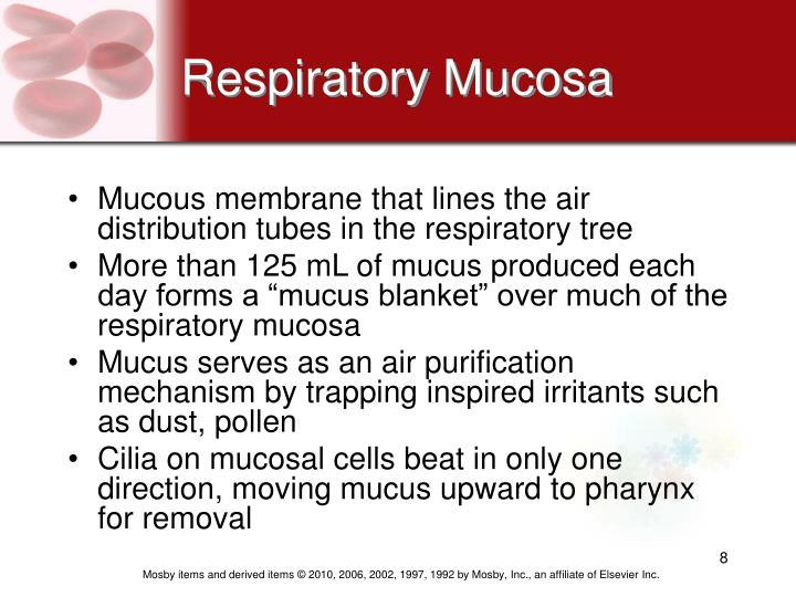 Respiratory Mucosa
