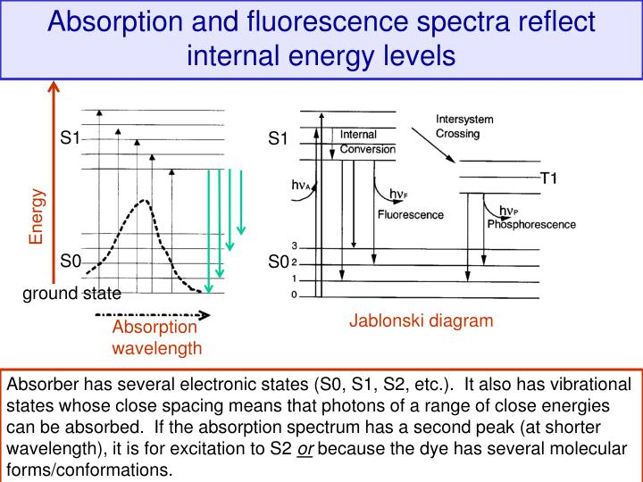Absorption and fluorescence spectra reflect internal energy levels