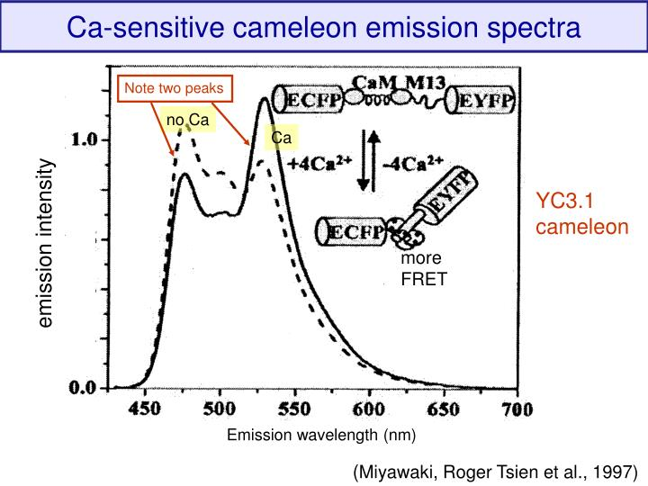 Ca-sensitive cameleon emission spectra