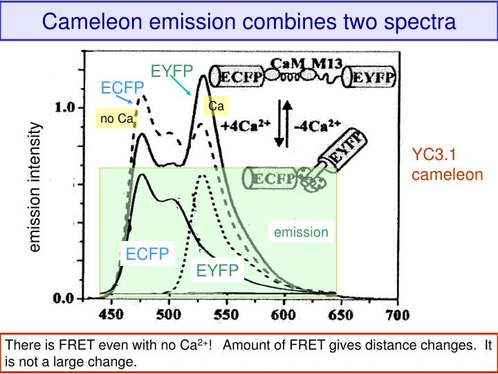 Cameleon emission combines two spectra