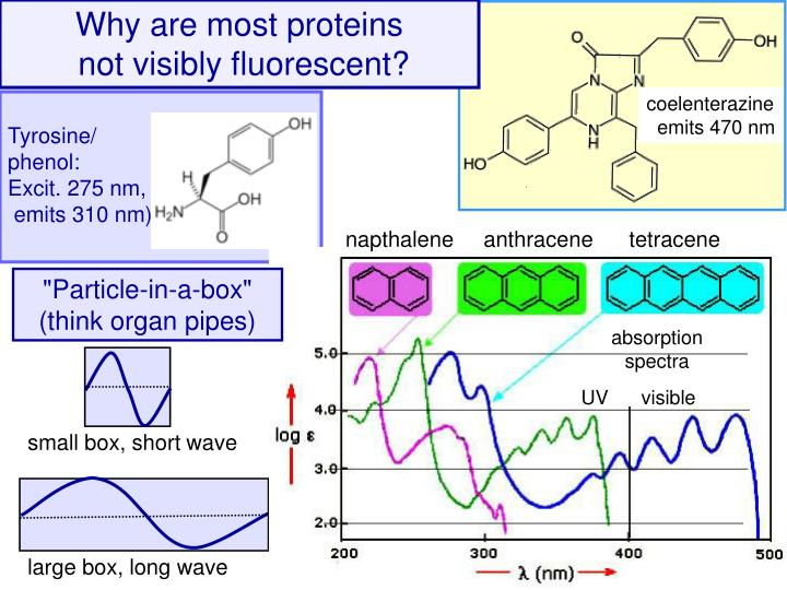 Why are most proteins