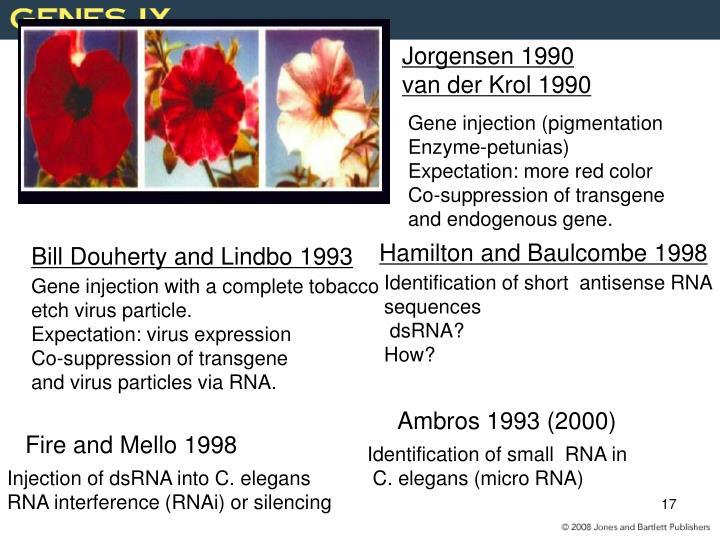 Jorgensen 1990