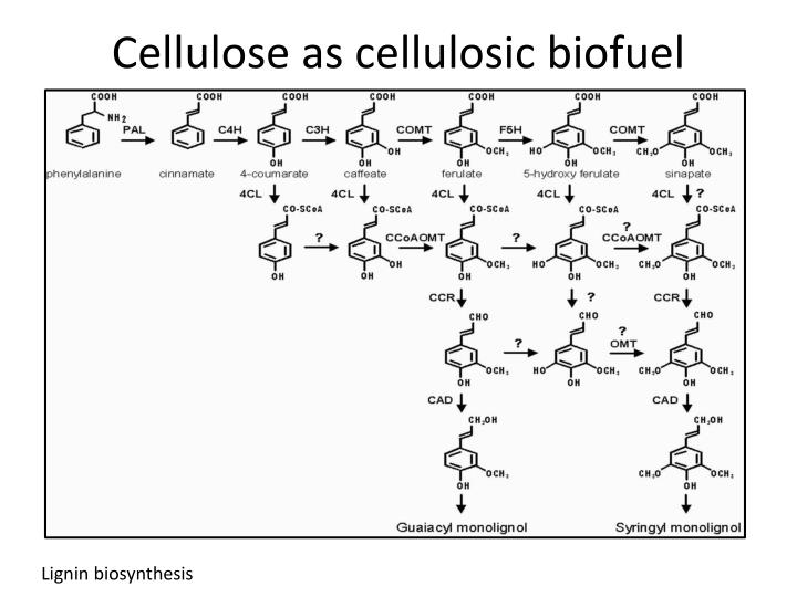 Cellulose as cellulosic