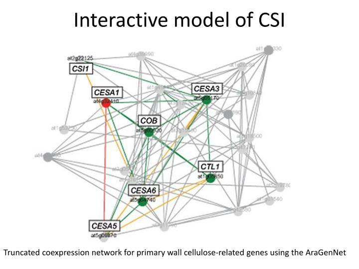 Interactive model of CSI
