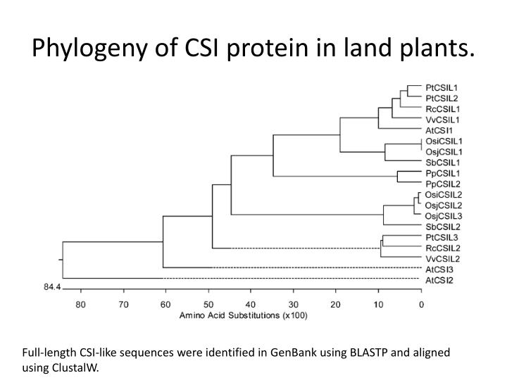 Phylogeny of CSI protein in land plants.