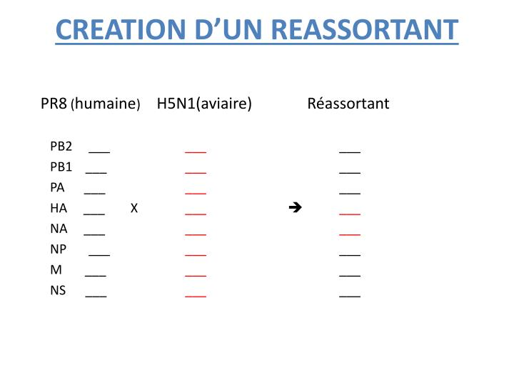 CREATION D'UN REASSORTANT