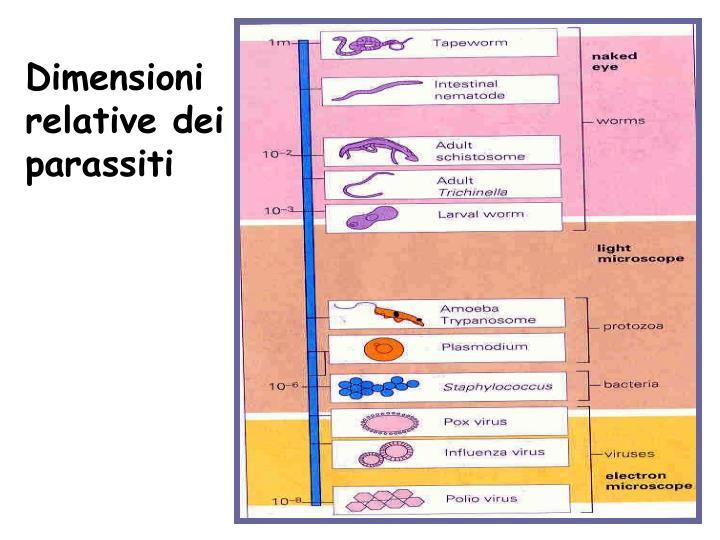 Dimensioni relative dei parassiti